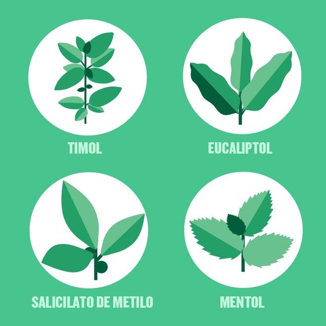 Iconos de los cuatro aceites esenciales